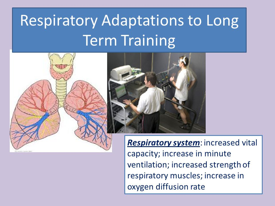 Respiratory Adaptations to Long Term Training Respiratory system: increased vital capacity; increase in minute ventilation; increased strength of respiratory muscles; increase in oxygen diffusion rate