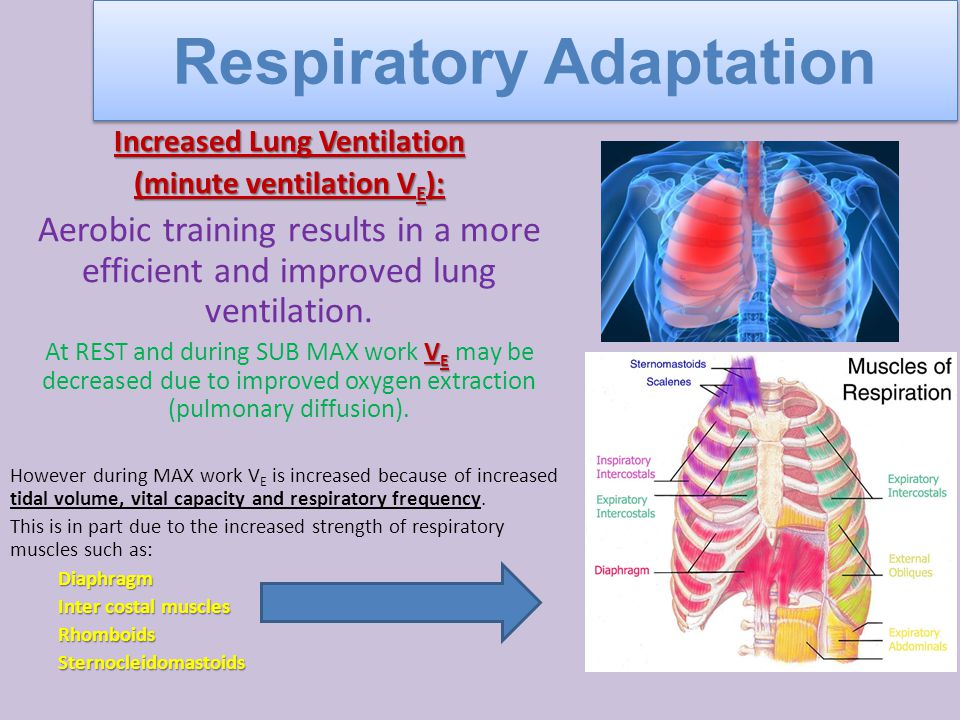 Increased Lung Ventilation (minute ventilation V E ): Aerobic training results in a more efficient and improved lung ventilation.