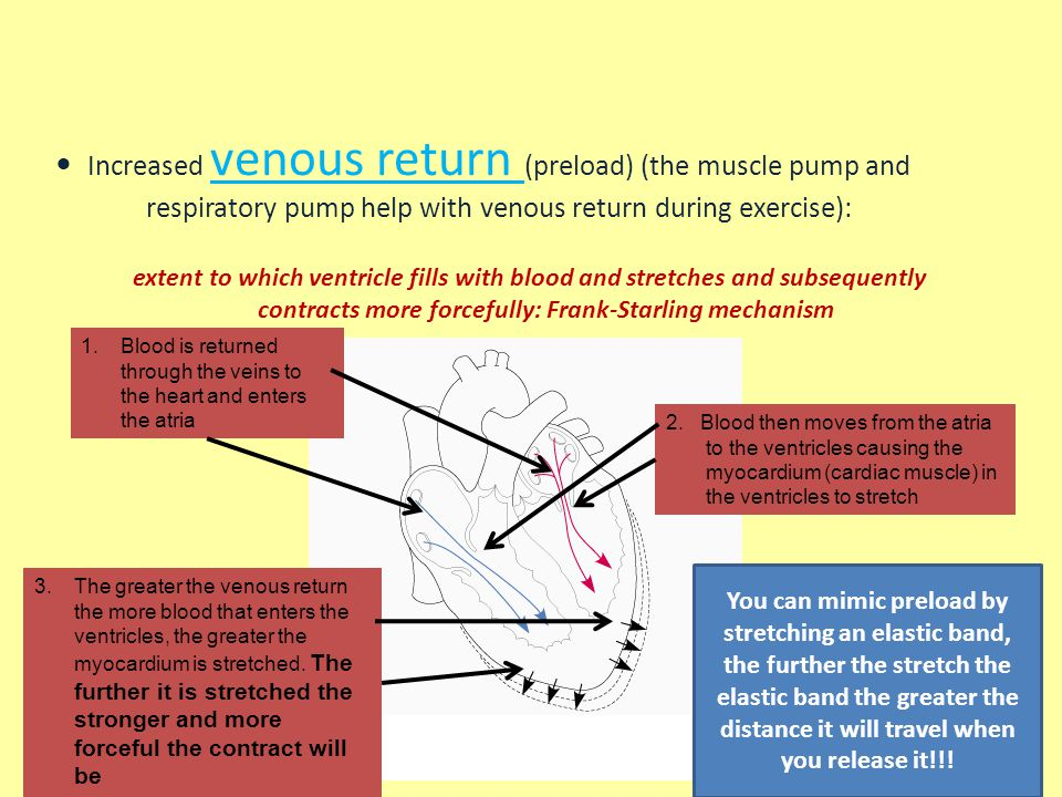 Acute changes in Q and BP during exercise allow for increased total blood flow to the body.