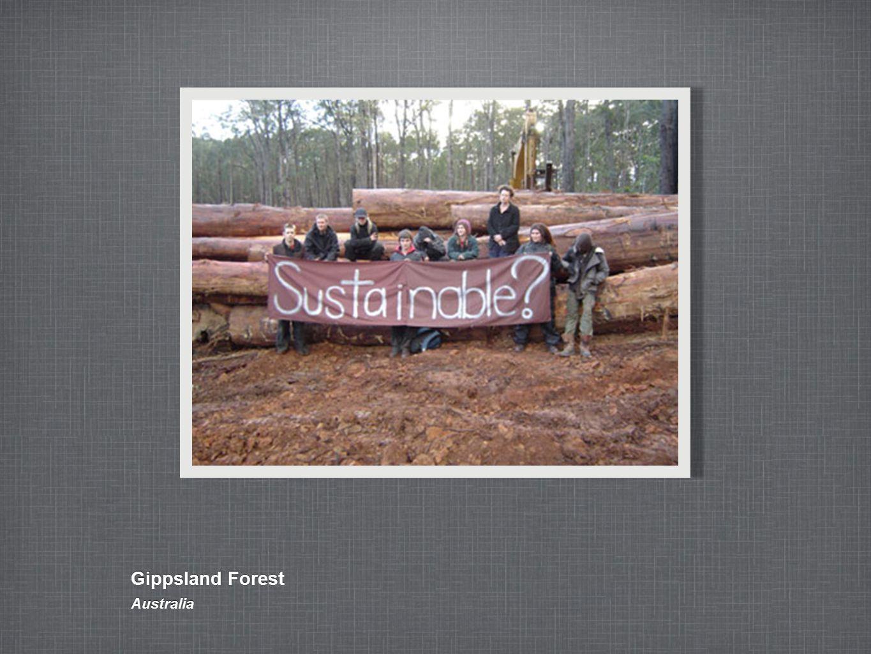 Gippsland Forest Australia
