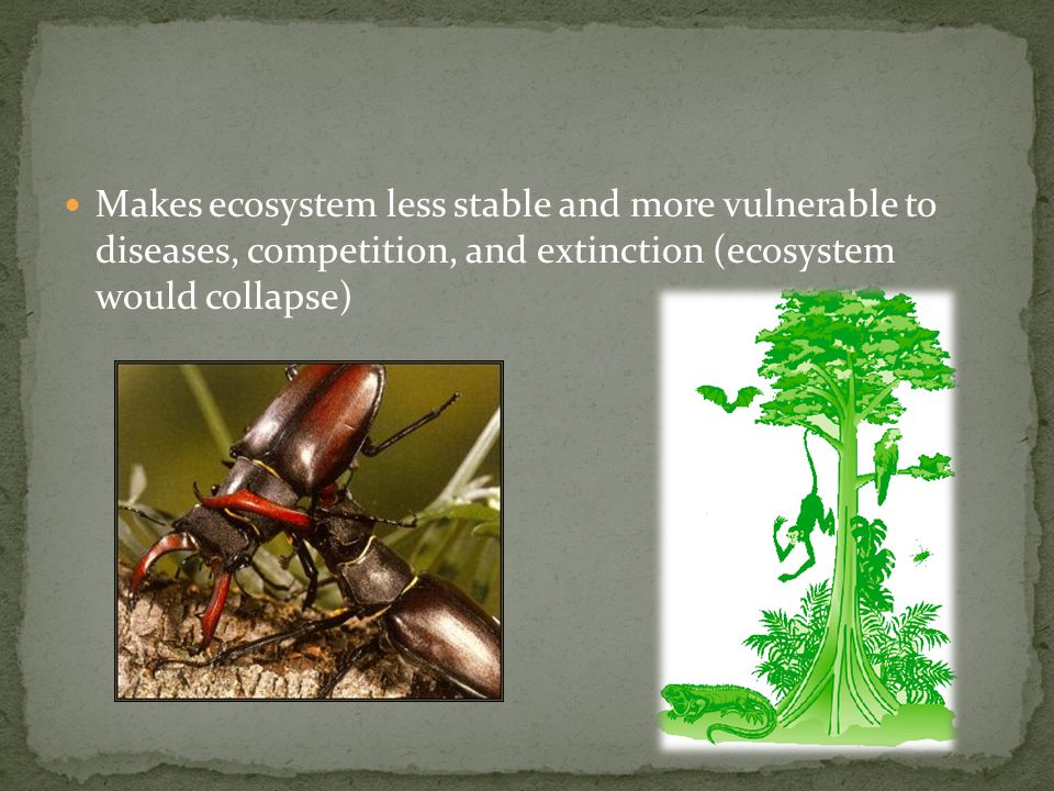 Makes ecosystem less stable and more vulnerable to diseases, competition, and extinction (ecosystem would collapse)