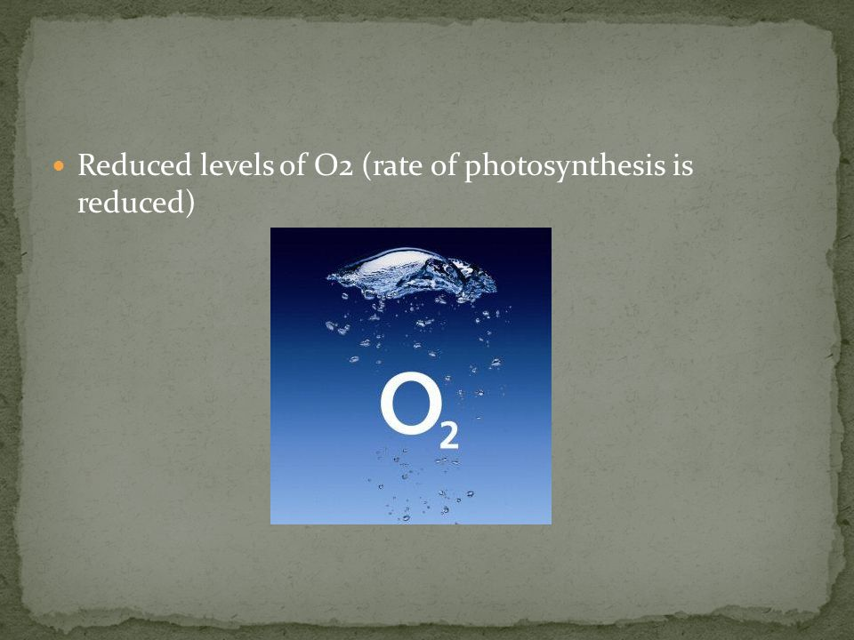 Reduced levels of O2 (rate of photosynthesis is reduced)