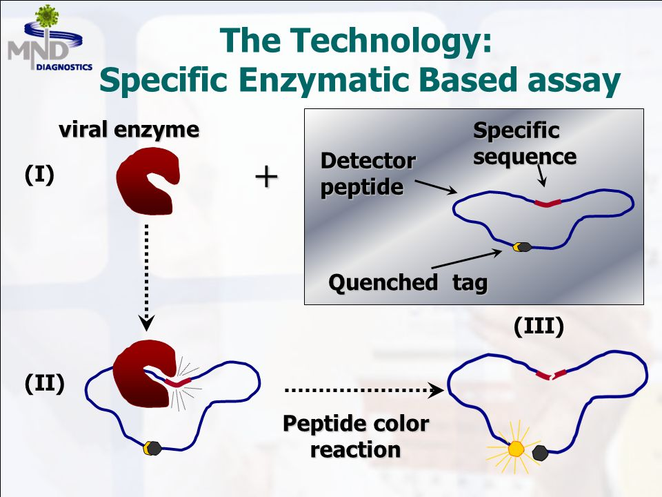 The Technology: Specific Enzymatic Based assay (I) (II) + Peptide color reaction viral enzyme Quenched tag Specificsequence Detectorpeptide (III)