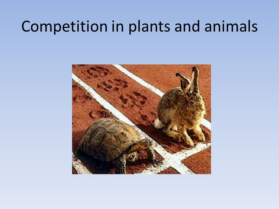 Possible relationships between 2 organisms A and B + = 'gain' - = 'lose' O = 'no effect' Organism A +_0 Organism B ++ + -+ o _x- - o 0xxo oo o Which one is 'competition'?