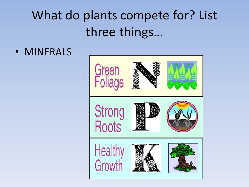 What do plants compete for List three things… MINERALS