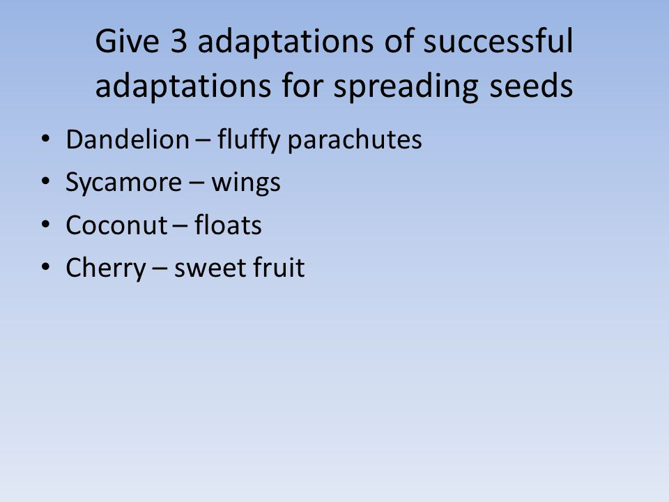 Give 3 adaptations of successful adaptations for spreading seeds Dandelion – fluffy parachutes Sycamore – wings Coconut – floats Cherry – sweet fruit