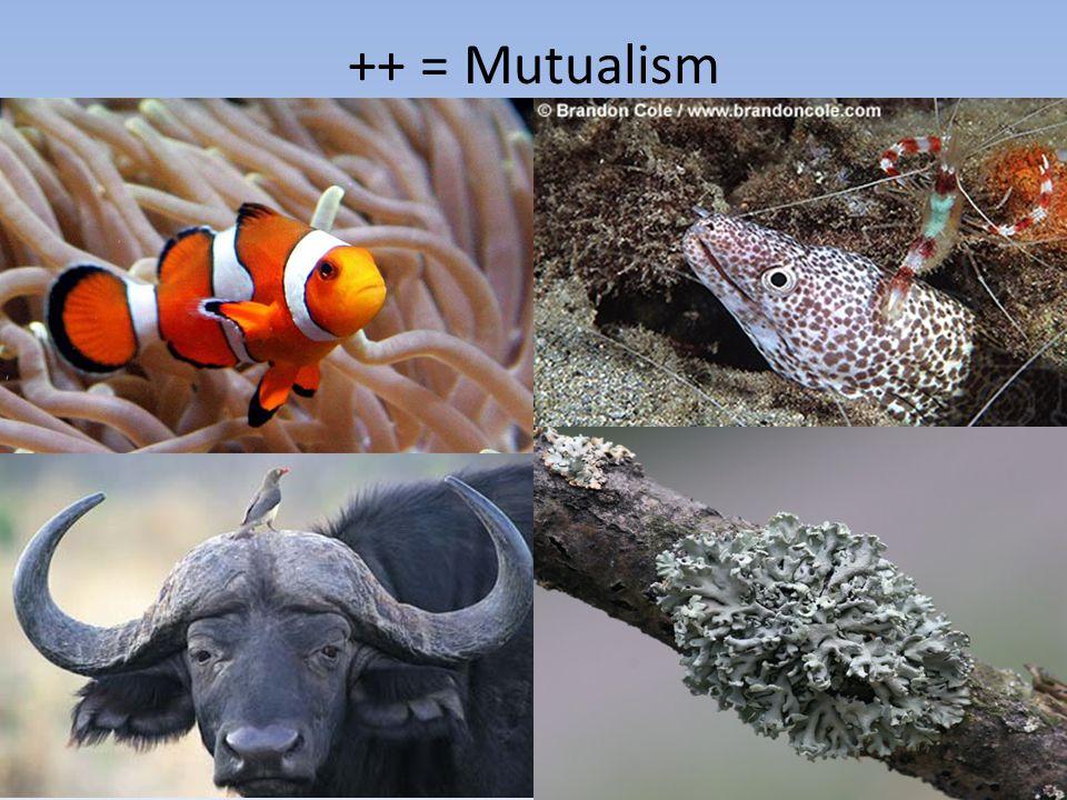 + - = predation / parasitism