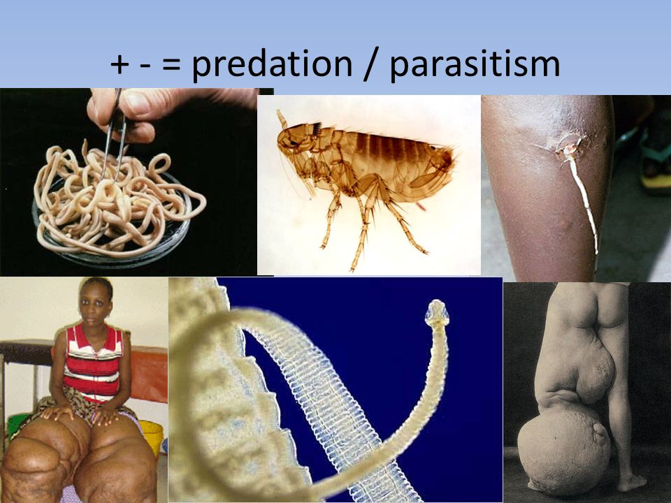 PREDATOR - PREY RELATIONSHIPS It's been a bad day! Yeah – and about to get much worse..