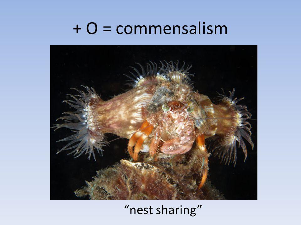 + O = commensalism nest sharing