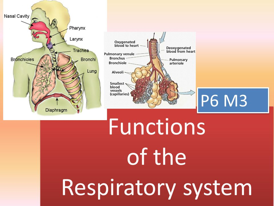 Functions of the Respiratory system P6 M3