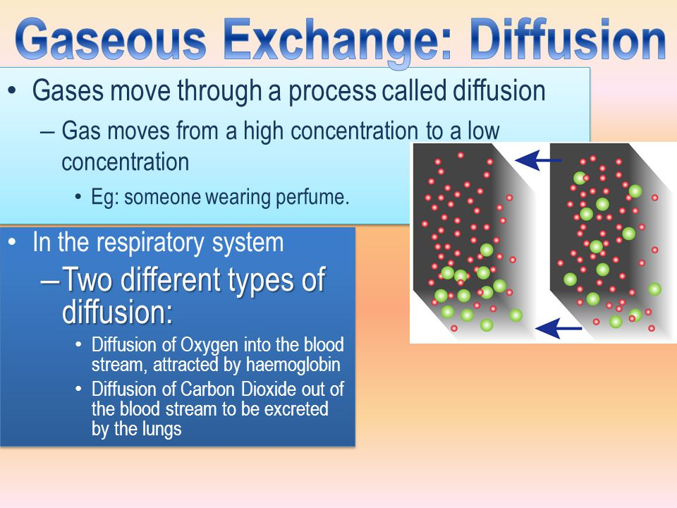 Gases move through a process called diffusion – Gas moves from a high concentration to a low concentration Eg: someone wearing perfume. Gases move thr