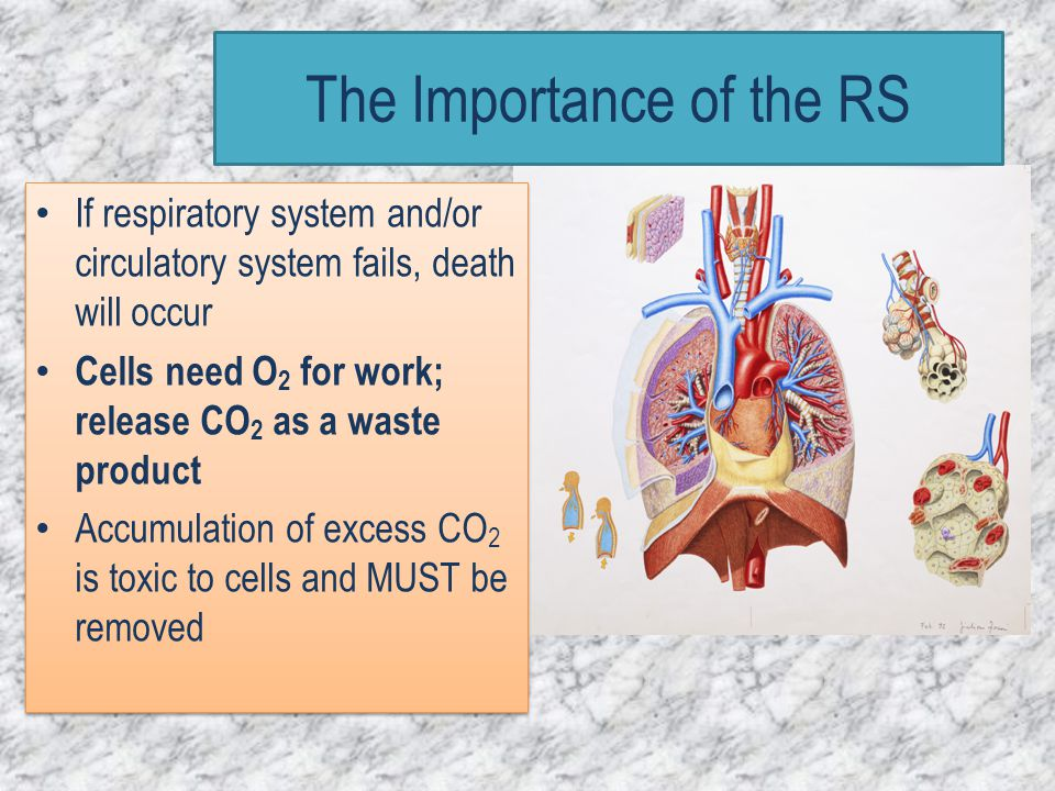 If respiratory system and/or circulatory system fails, death will occur Cells need O 2 for work; release CO 2 as a waste product Accumulation of exces