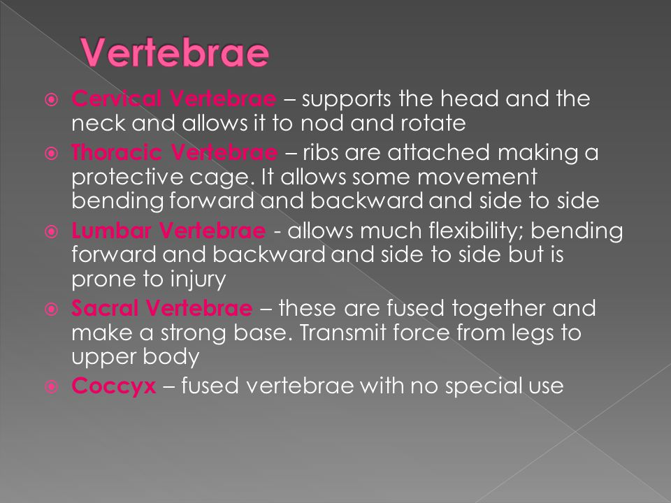  Cervical Vertebrae – supports the head and the neck and allows it to nod and rotate  Thoracic Vertebrae – ribs are attached making a protective cag
