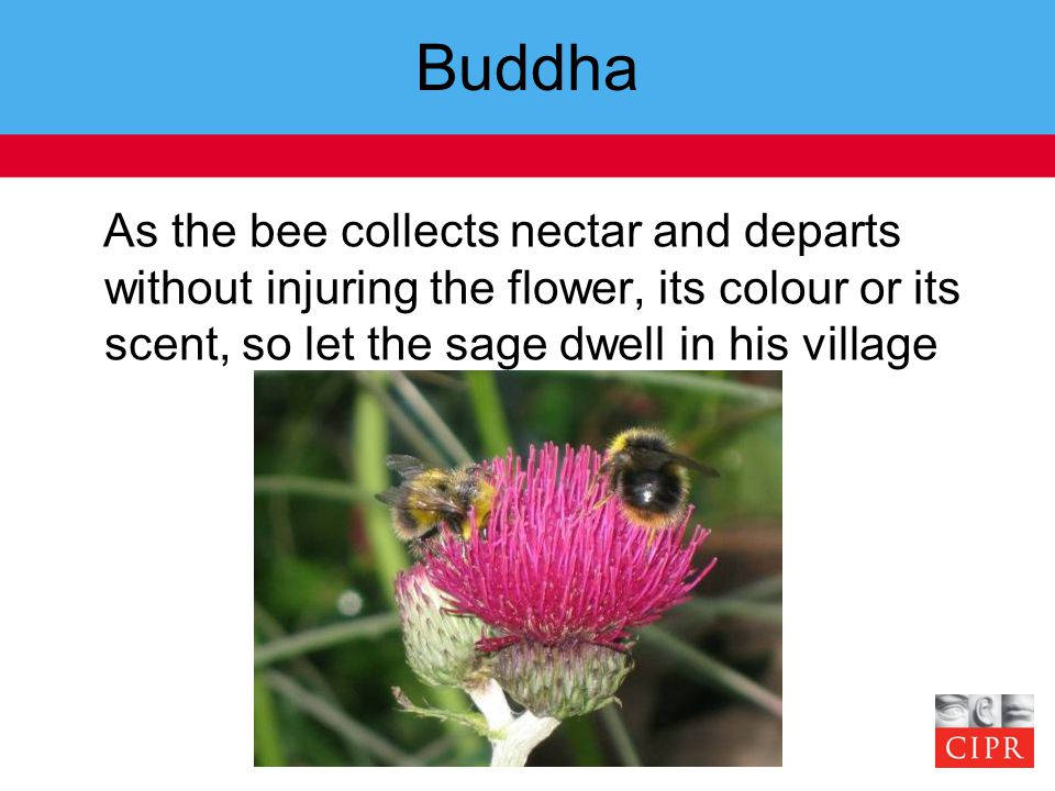 Buddha As the bee collects nectar and departs without injuring the flower, its colour or its scent, so let the sage dwell in his village