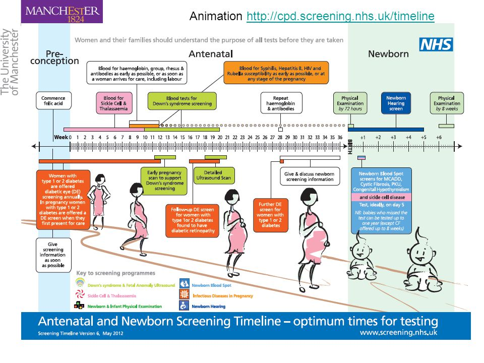Animation http://cpd.screening.nhs.uk/timelinehttp://cpd.screening.nhs.uk/timeline