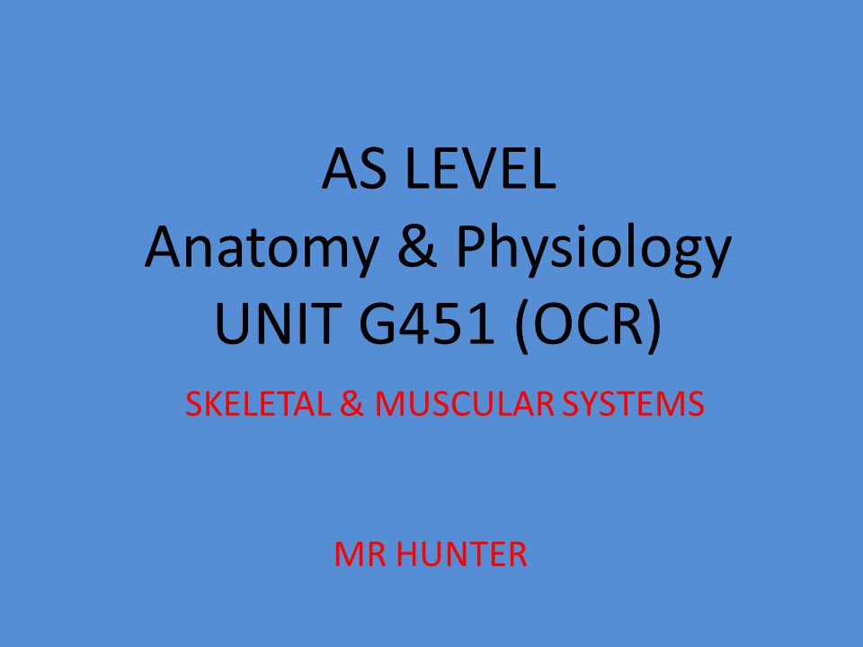 AS LEVEL Anatomy & Physiology UNIT G451 (OCR) SKELETAL & MUSCULAR SYSTEMS MR HUNTER