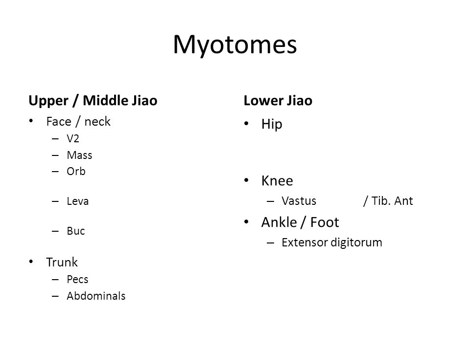 Myotomes Upper / Middle Jiao Face / neck – V2 / V3 (cranial nerves) – Massetor (clench your teeth) – Orbital muscles (helps control area around eyes) – Levator labii superious (helps to move nose) – Buccinator (helps to move mouth) Trunk – Pecs – Abdominals Lower Jiao Hip – Iliopsoas / pectineus / sartorious / Rec.