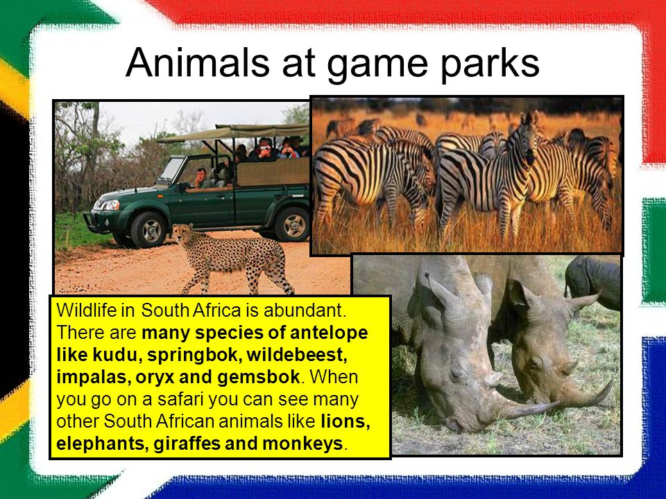 Animals at game parks Wildlife in South Africa is abundant. There are many species of antelope like kudu, springbok, wildebeest, impalas, oryx and gem