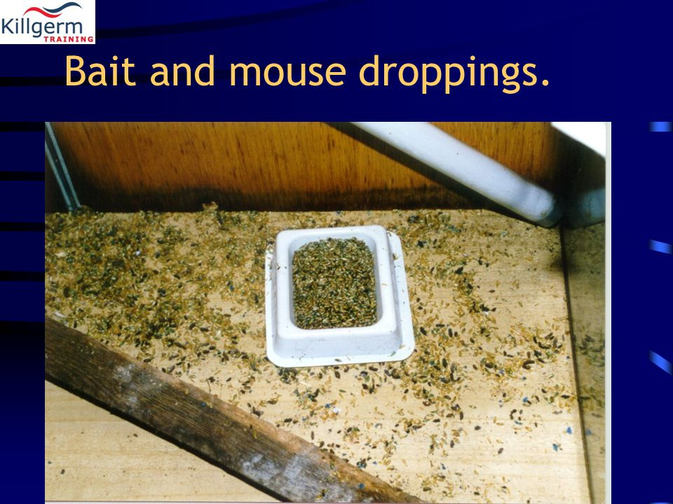 Bait and mouse droppings.