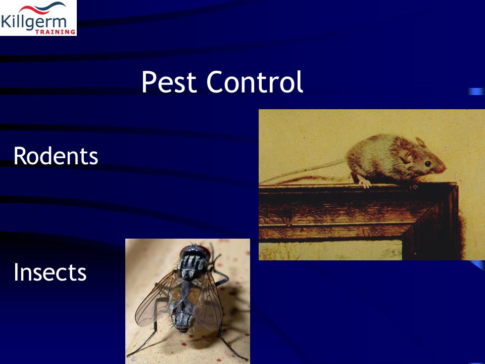 Pest Control Rodents Insects