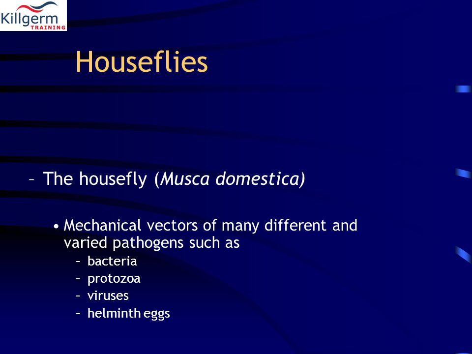 Houseflies –The housefly (Musca domestica) Mechanical vectors of many different and varied pathogens such as –bacteria –protozoa –viruses –helminth eggs