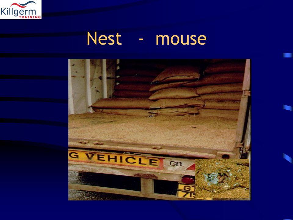 Nest - mouse