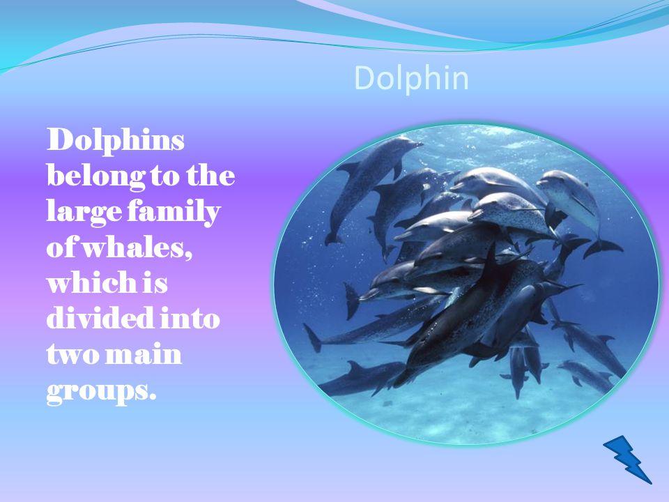 Contents Dolphin Monkey Kangaroo Elephant Great White Shark