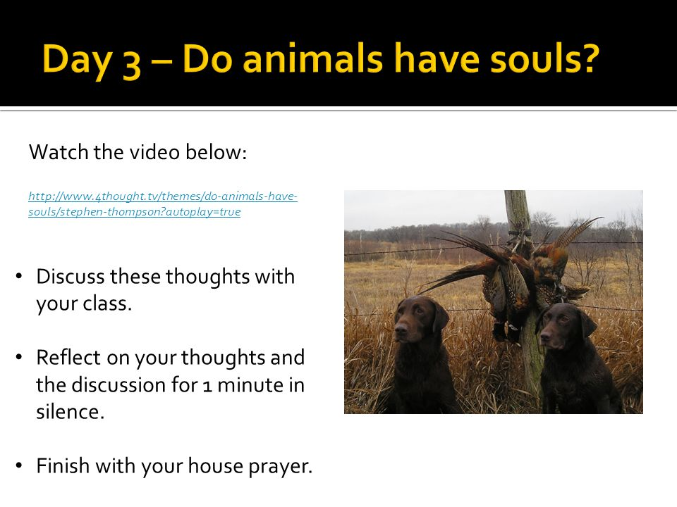Watch the video below: http://www.4thought.tv/themes/do-animals-have- souls/stephen-thompson autoplay=true Discuss these thoughts with your class.