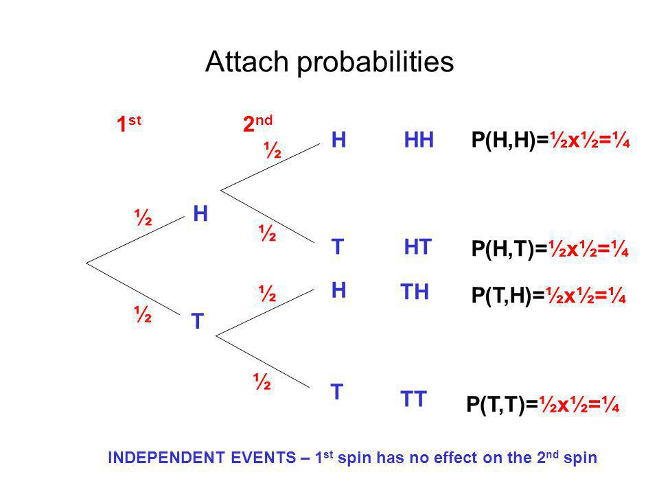 Attach probabilities H H H T T T HH HT TH TT 2 nd 1 st ½ ½ ½ ½ ½ ½ P(H,H)=½x½=¼ P(H,T)=½x½=¼ P(T,H)=½x½=¼ P(T,T)=½x½=¼ INDEPENDENT EVENTS – 1 st spin has no effect on the 2 nd spin