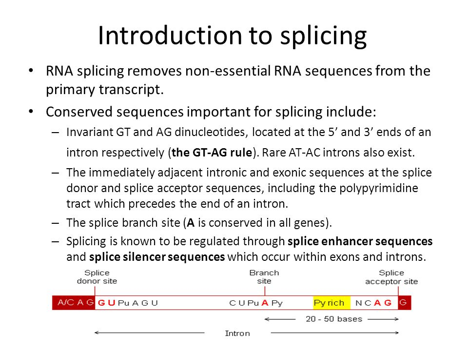 Spliceosome The splicing mechanism is mediated by a large RNA-protein complex, the spliceosome (made up of 5 small nuclear ribonucleoproteins (snRNPs) and more than 150 additional proteins).