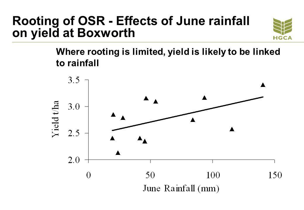 Rooting of OSR - Effects of June rainfall on yield at Boxworth Where rooting is limited, yield is likely to be linked to rainfall
