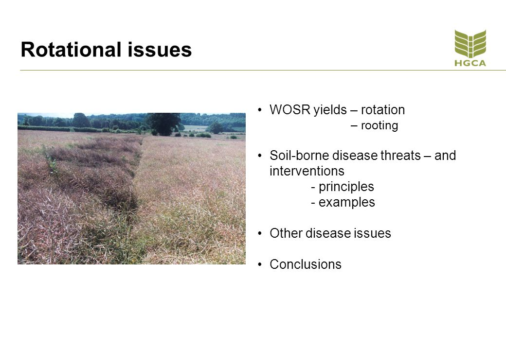 Rotational issues WOSR yields – rotation – rooting Soil-borne disease threats – and interventions - principles - examples Other disease issues Conclusions