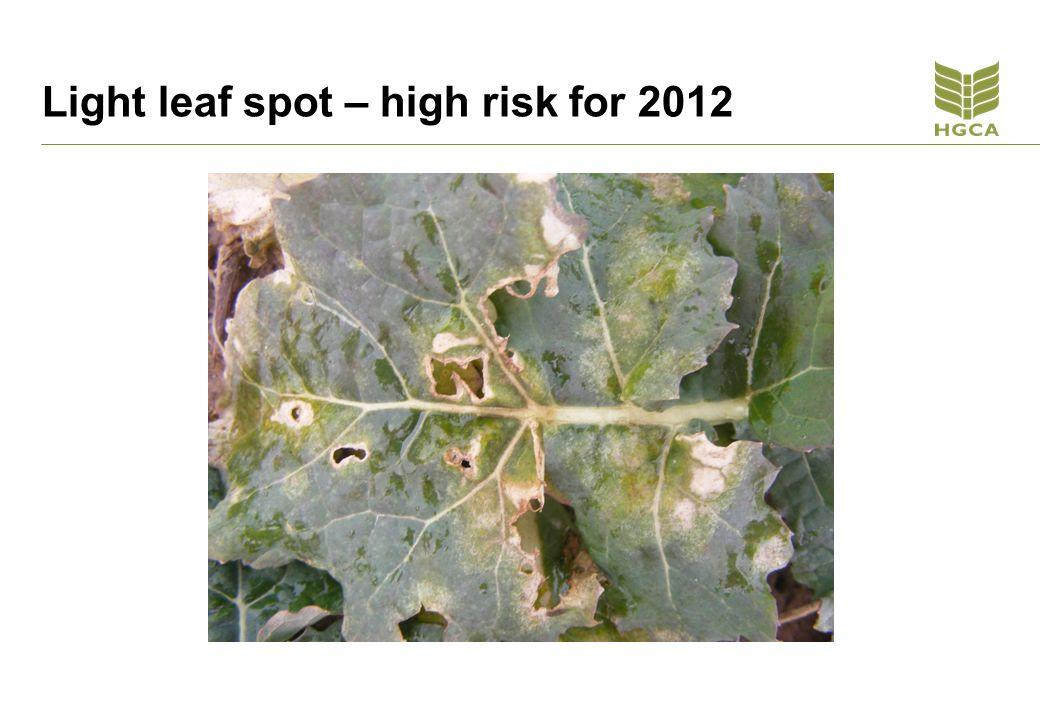 Light leaf spot – high risk for 2012