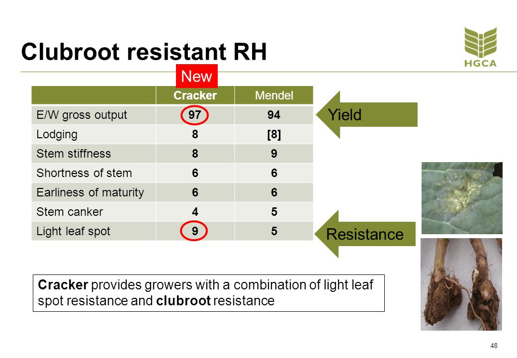 Clubroot resistant RH CrackerMendel E/W gross output9794 Lodging8[8] Stem stiffness89 Shortness of stem66 Earliness of maturity66 Stem canker45 Light leaf spot95 Cracker provides growers with a combination of light leaf spot resistance and clubroot resistance Yield Resistance New 48