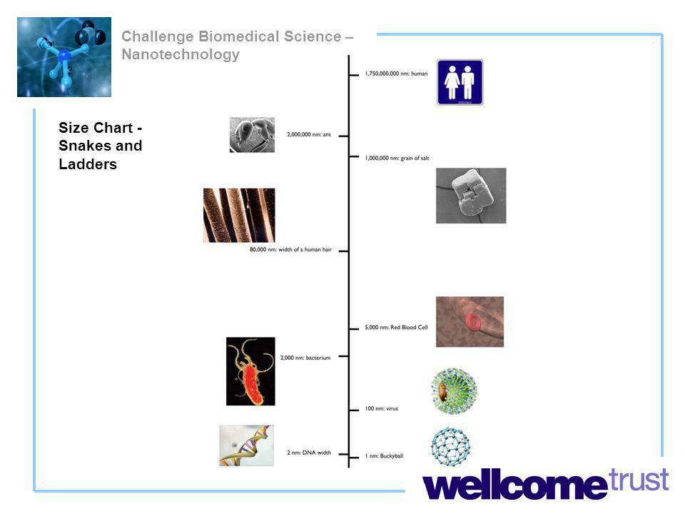 Challenge Biomedical Science – Nanotechnology Size Chart - Snakes and Ladders