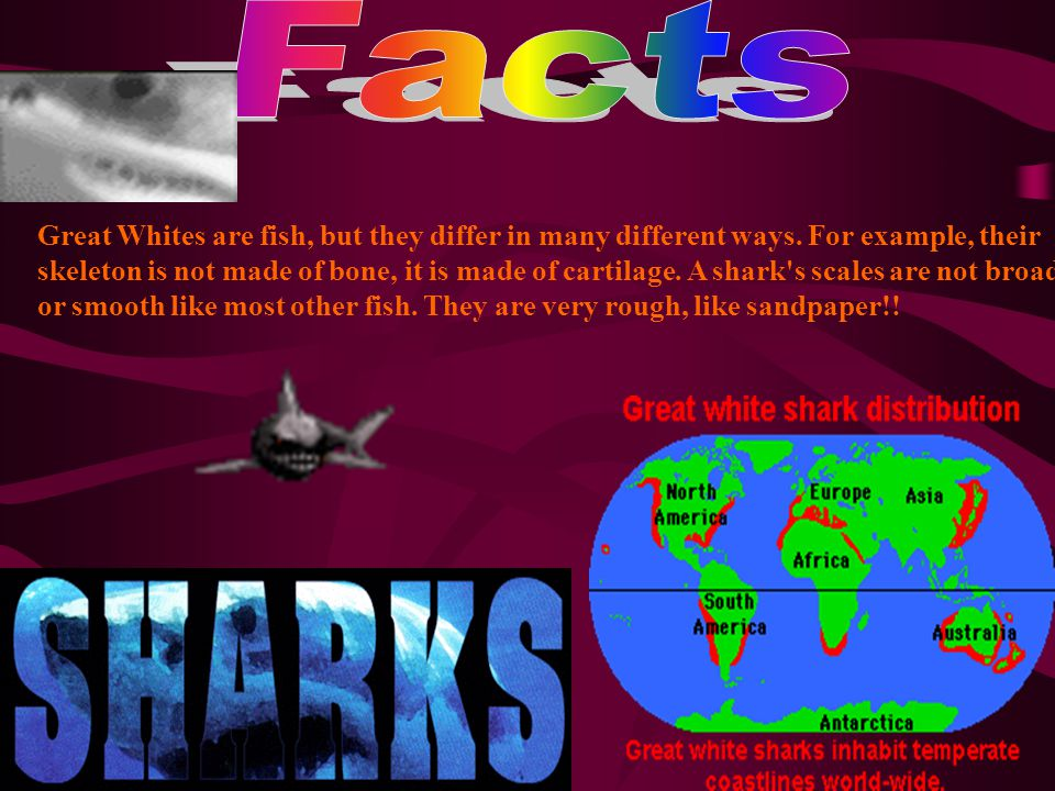 Great Whites are fish, but they differ in many different ways.