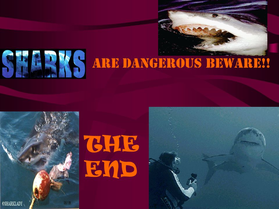 are dangerous beware!! THE END