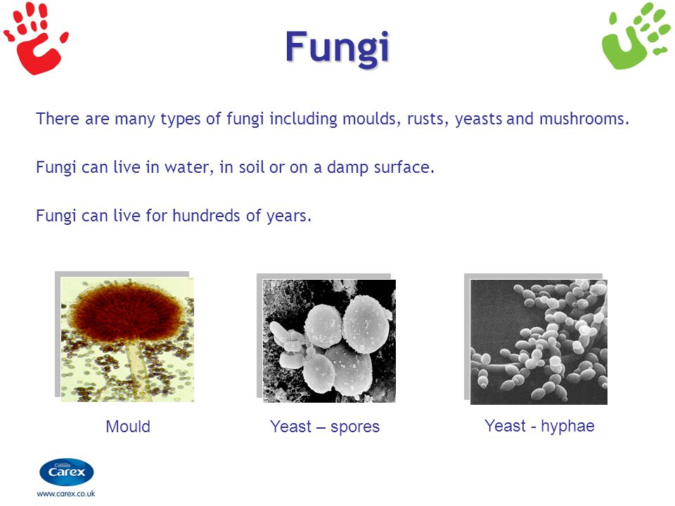 Fungi There are many types of fungi including moulds, rusts, yeasts and mushrooms. Fungi can live in water, in soil or on a damp surface. Fungi can li