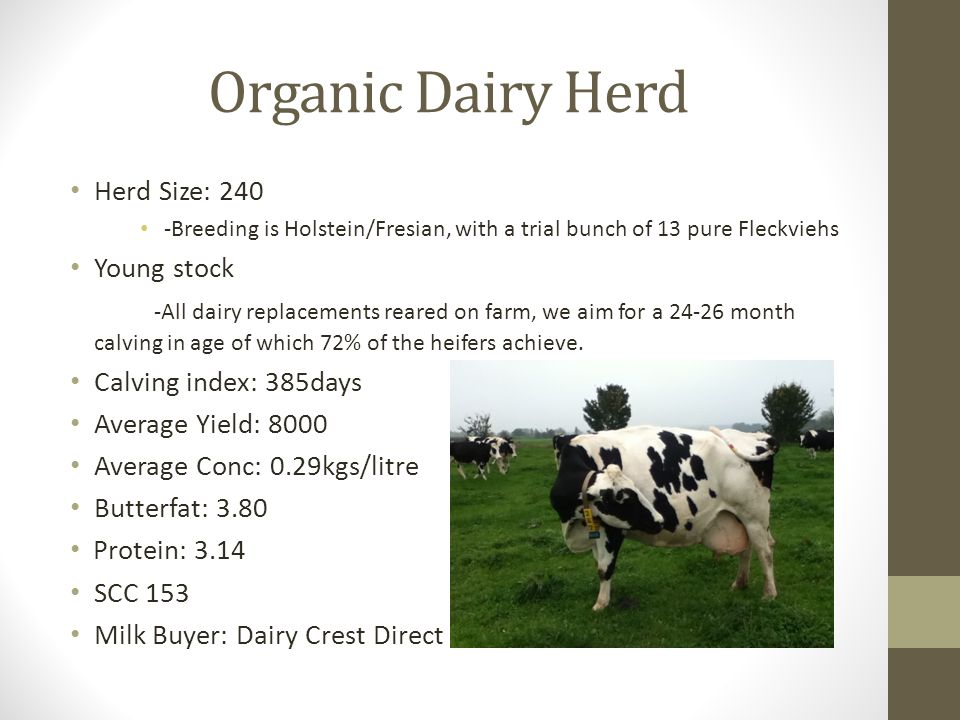Herd Size: 240 -Breeding is Holstein/Fresian, with a trial bunch of 13 pure Fleckviehs Young stock -All dairy replacements reared on farm, we aim for