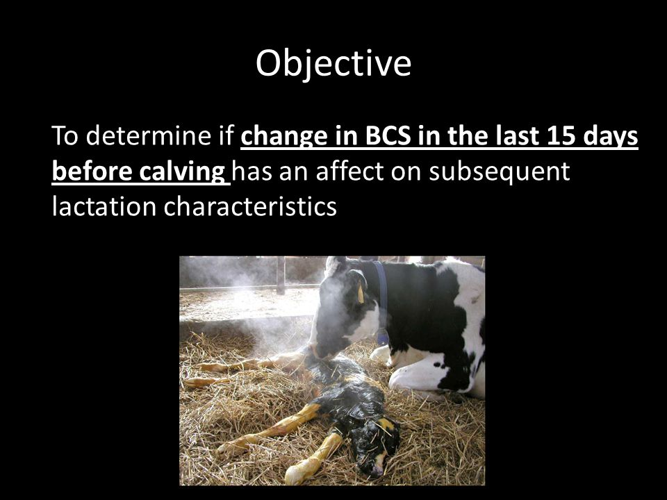 Objective To determine if change in BCS in the last 15 days before calving has an affect on subsequent lactation characteristics