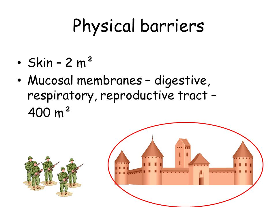 Physical barriers Skin – 2 m² Mucosal membranes – digestive, respiratory, reproductive tract – 400 m²
