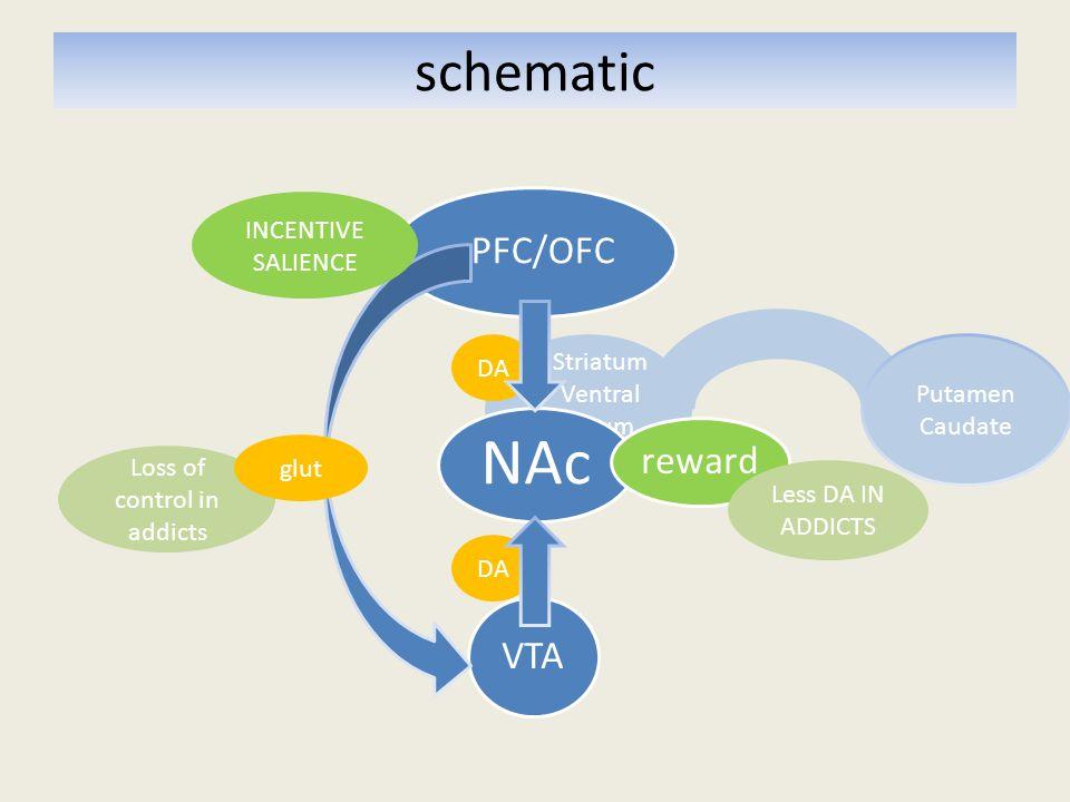 method Methylphenidate (MP) challenge Subjective behavioural effects PET: Glucose metabolism in PFC (ROI's OFC, CG, DLPFC) PET: Dopamine release in Striatum (ROI's CDT, PUT, VS) 20 controls & 20 detoxified alcoholics Single blind crossover design Methylphenidate (MP) challenge Subjective behavioural effects PET: Glucose metabolism in PFC (ROI's OFC, CG, DLPFC) PET: Dopamine release in Striatum (ROI's CDT, PUT, VS) 20 controls & 20 detoxified alcoholics Single blind crossover design
