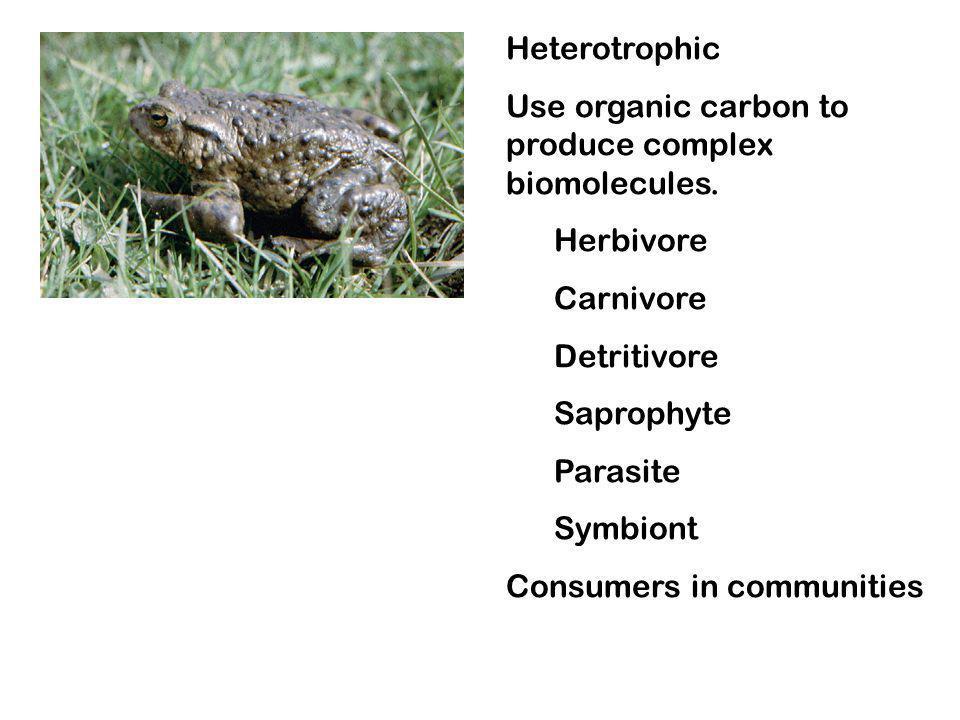 Heterotrophic Use organic carbon to produce complex biomolecules. Herbivore Carnivore Detritivore Saprophyte Parasite Symbiont Consumers in communitie