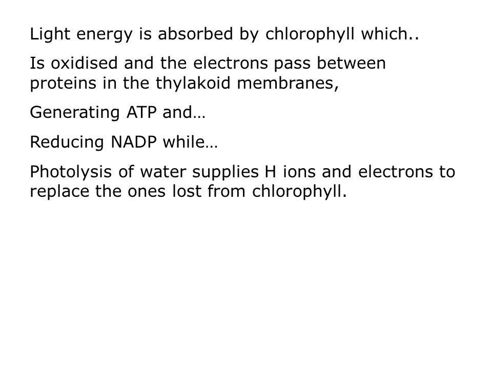 Light energy is absorbed by chlorophyll which.. Is oxidised and the electrons pass between proteins in the thylakoid membranes, Generating ATP and… Re