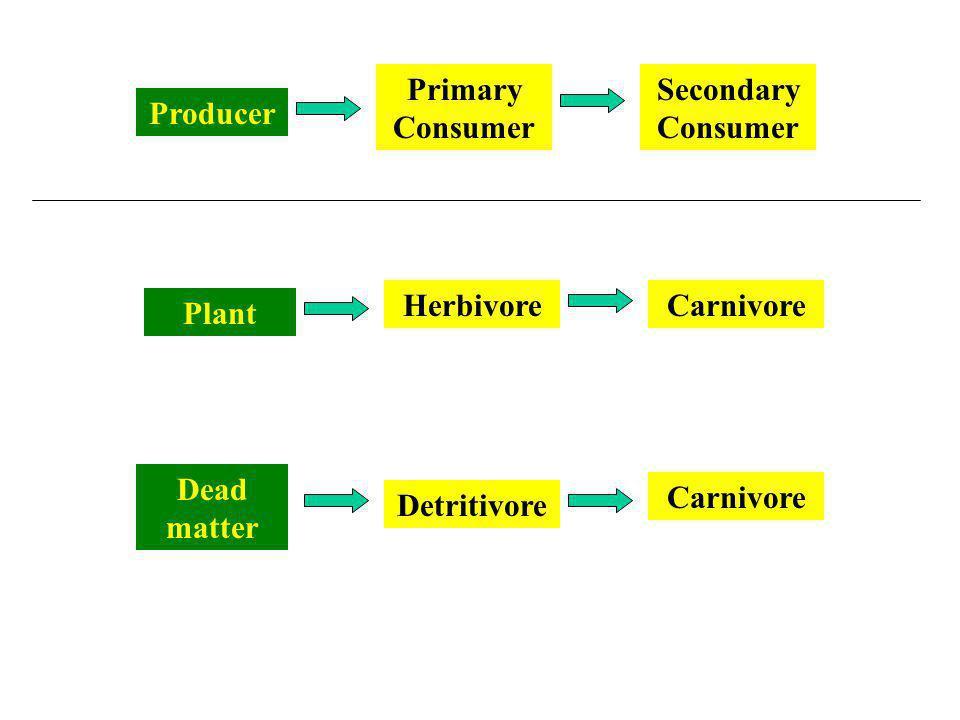 Producer Primary Consumer Secondary Consumer Plant HerbivoreCarnivore Dead matter Detritivore Carnivore