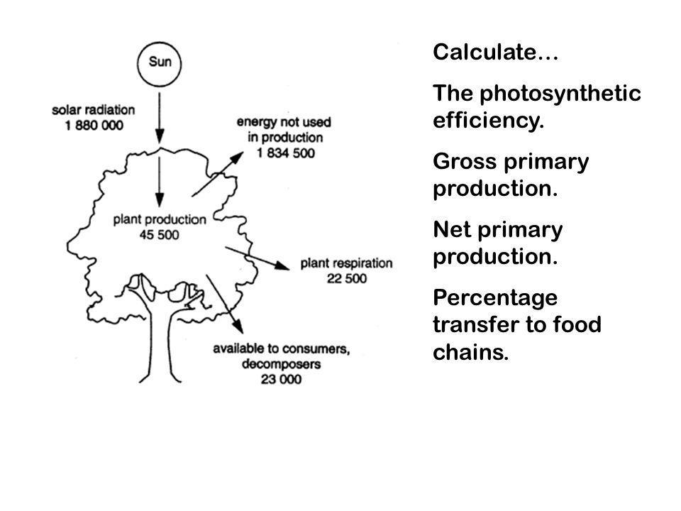 Calculate… The photosynthetic efficiency. Gross primary production.