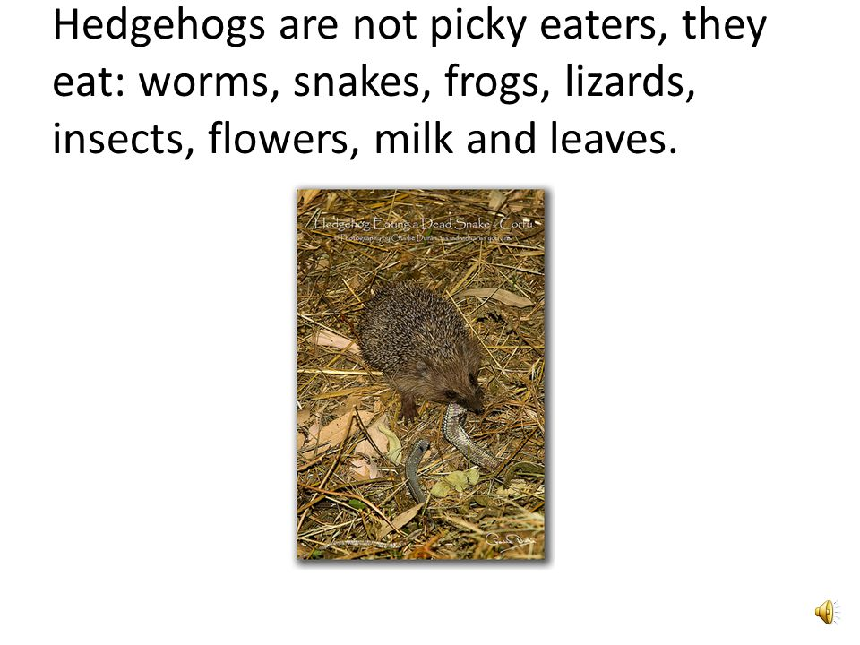 Hedgehogs have spikes on their backs to protect themselves.