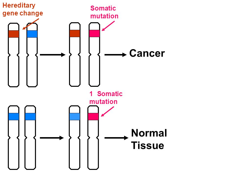 Cancer Hereditary gene change 1 Somatic mutation Normal Tissue Somatic mutation