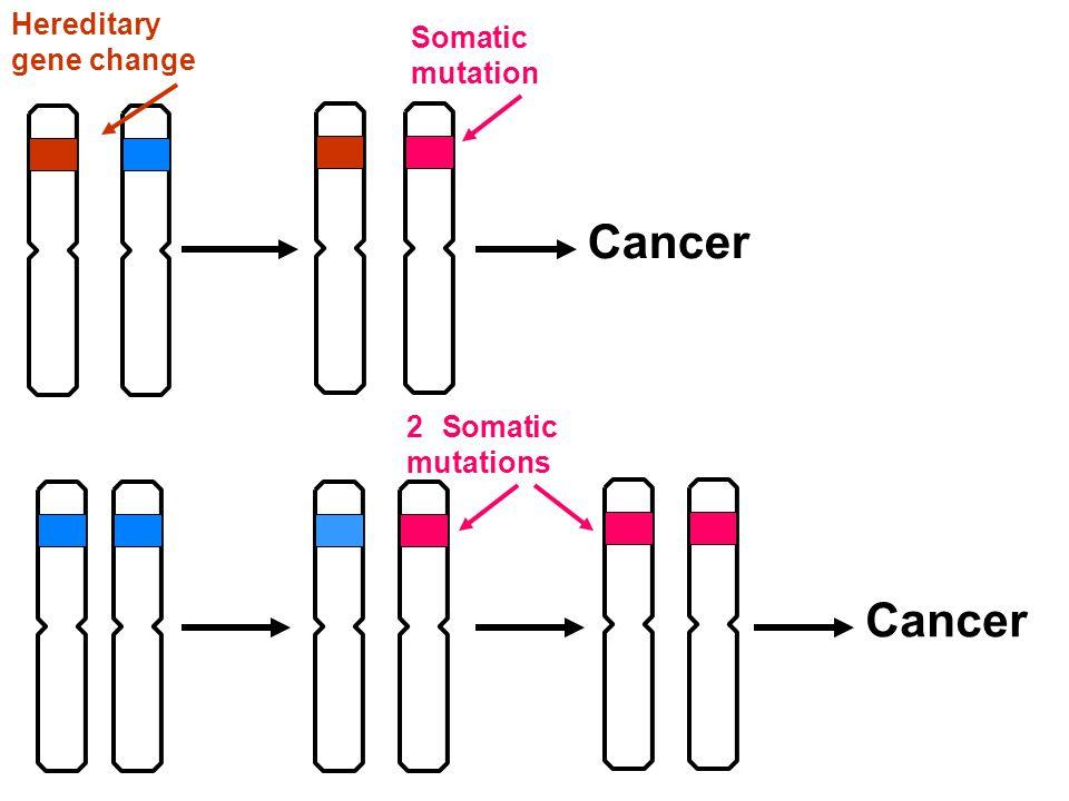 Cancer Hereditary gene change Somatic mutation Cancer 2 Somatic mutations