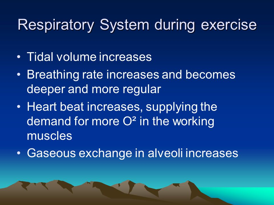 Respiratory System during exercise Tidal volume increases Breathing rate increases and becomes deeper and more regular Heart beat increases, supplying